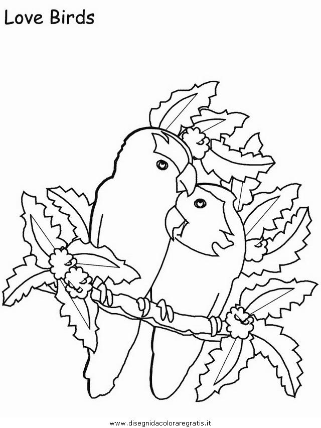 animali/uccelli/uccelli_21.JPG