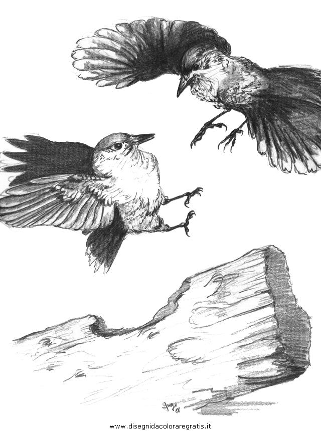 animali/uccelli/uccelli_230.JPG