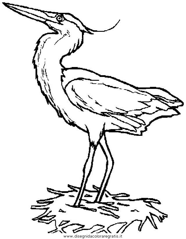 animali/uccelli/uccelli_238.JPG