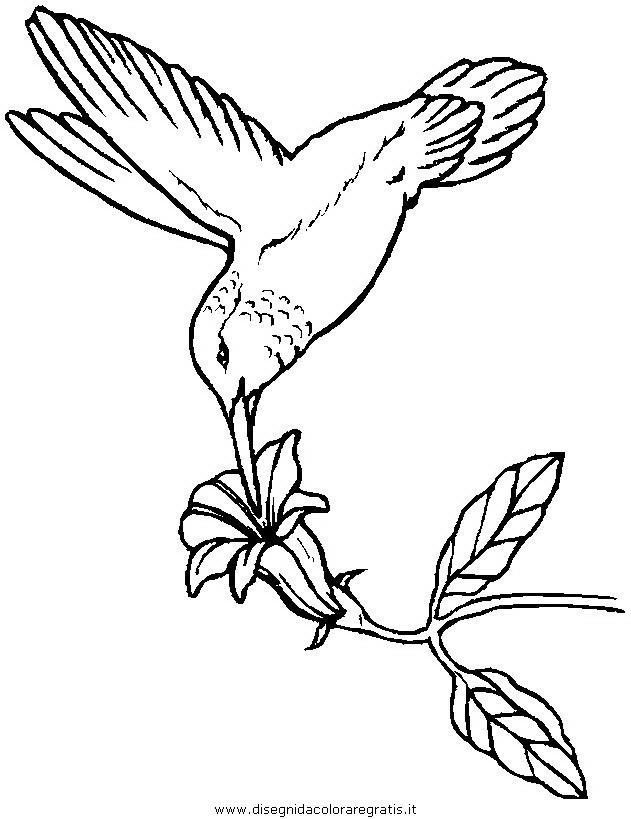 animali/uccelli/uccelli_239.JPG
