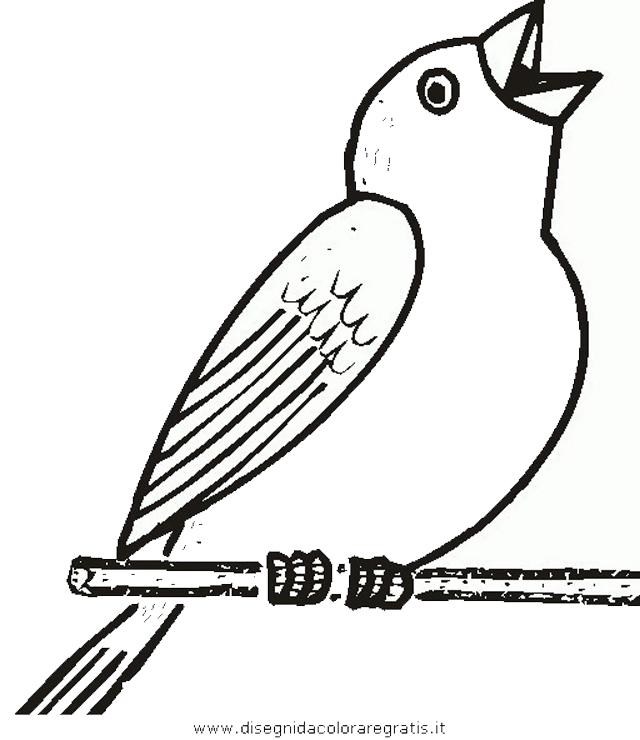 animali/uccelli/uccelli_243.JPG