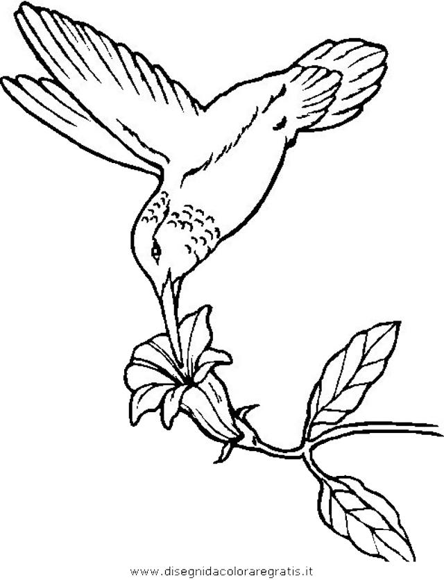 animali/uccelli/uccelli_259.JPG