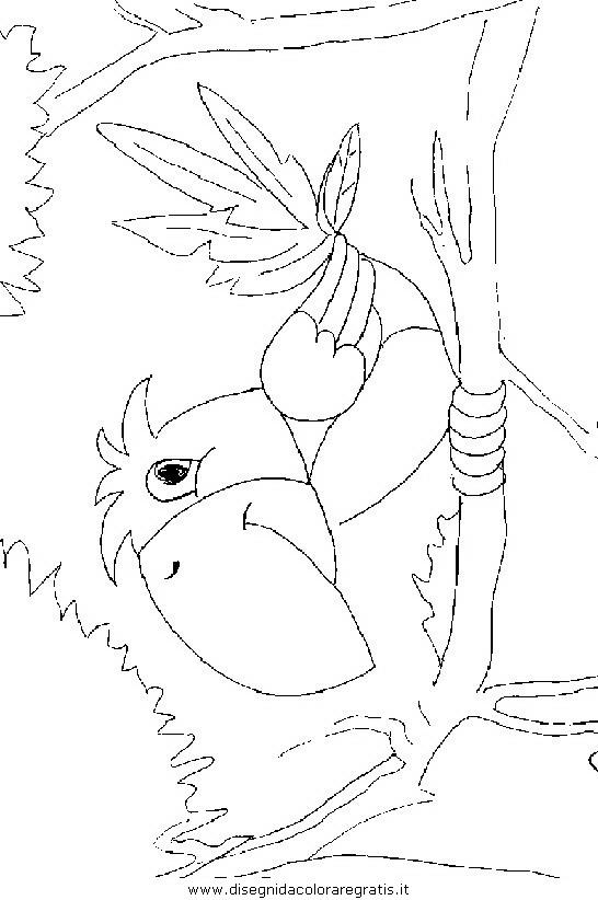 animali/uccelli/uccelli_272.JPG