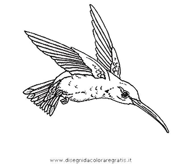 animali/uccelli/uccelli_279.JPG