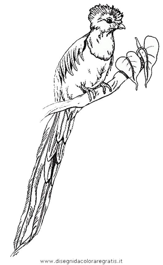 animali/uccelli/uccelli_282.JPG