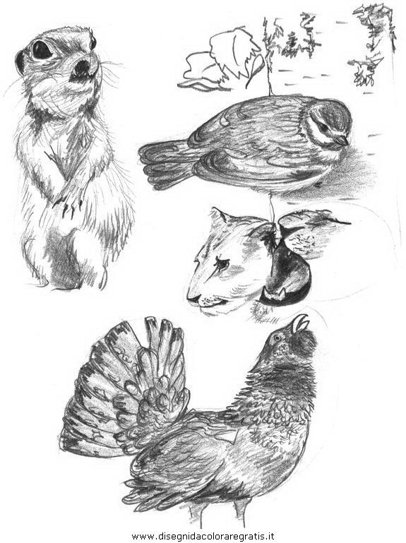 animali/uccelli/uccelli_284.JPG