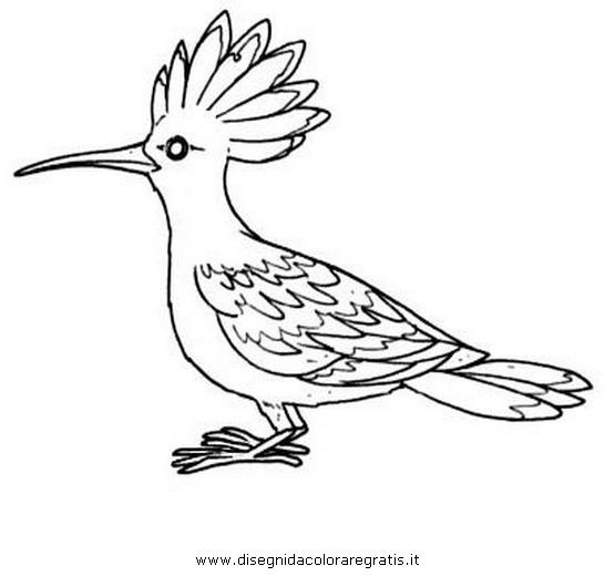 Disegno upupa animali da colorare - Semplici disegni di uccelli ...