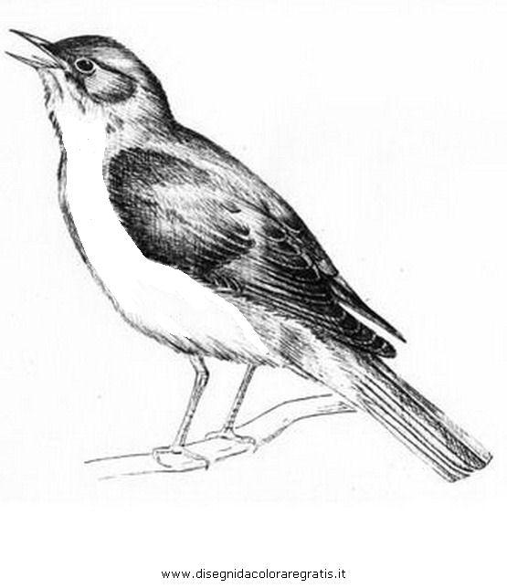 animali/uccelli/usignolo_01.JPG