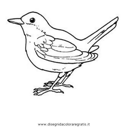 animali/uccelli/usignolo_02.JPG