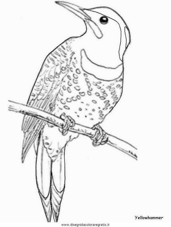 animali/uccelli/yellowhammer.JPG
