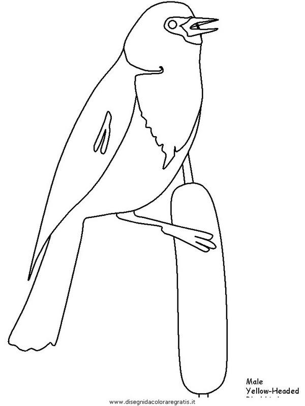 animali/uccelli/yellowheadedblackbird.JPG