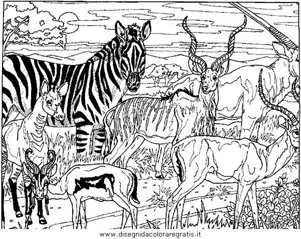 animali/zebre/zebra_25.JPG