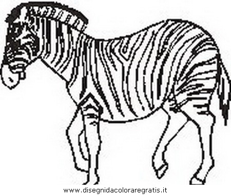 animali/zebre/zebra_29.JPG