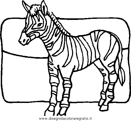 animali/zebre/zebra_34.JPG