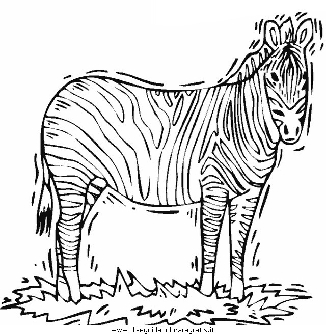 animali/zebre/zebra_37.JPG