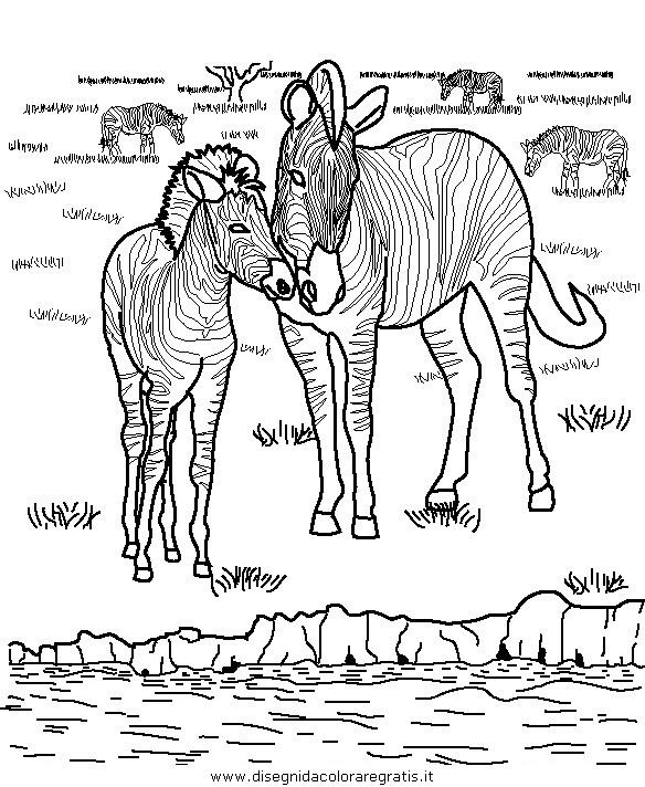 animali/zebre/zebra_40.JPG