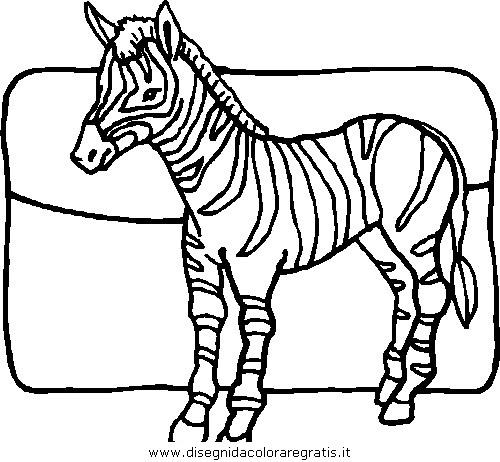 animali/zebre/zebra_41.JPG