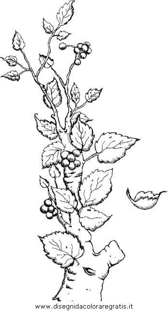 misti/giardino/branch.JPG