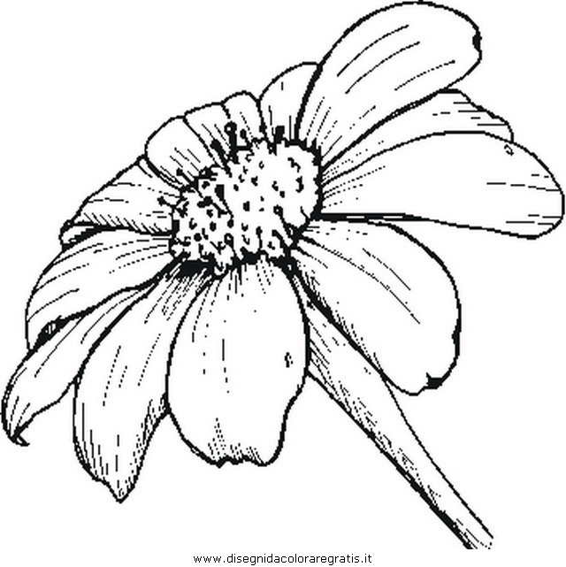 misti/giardino/daisy.JPG