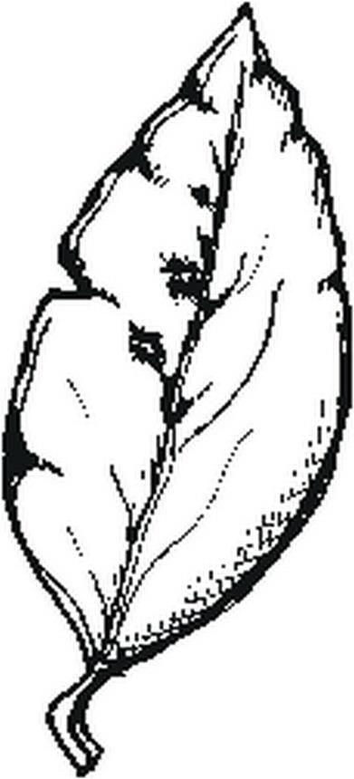 misti/giardino/leaf.JPG