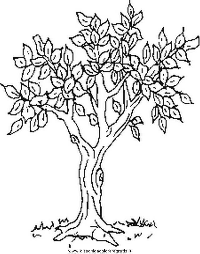 misti/giardino/tree.JPG