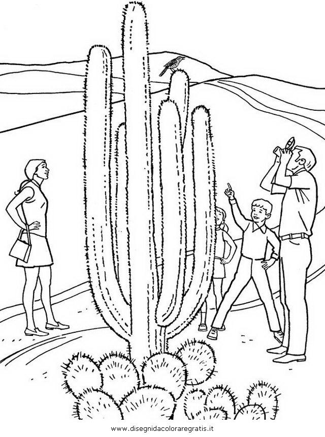misti/paesaggi/deserto_cactus.JPG