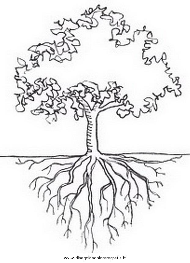 natura/alberi/faggio_0.JPG