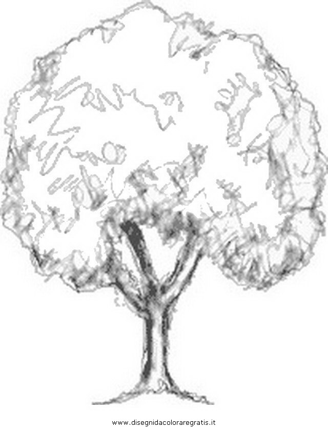 natura/alberi/faggio_1.JPG