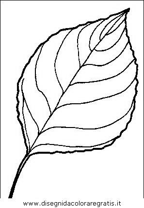 Disegni Di Piante Cornice Piante Ilustrationcsp1141153 ...