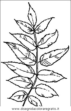 natura/alberi/piante_alberi_09.JPG