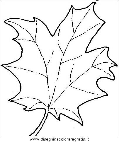 natura/alberi/piante_alberi_12.JPG