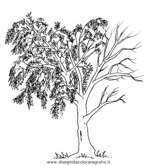 natura/alberi/piante_alberi_15.JPG