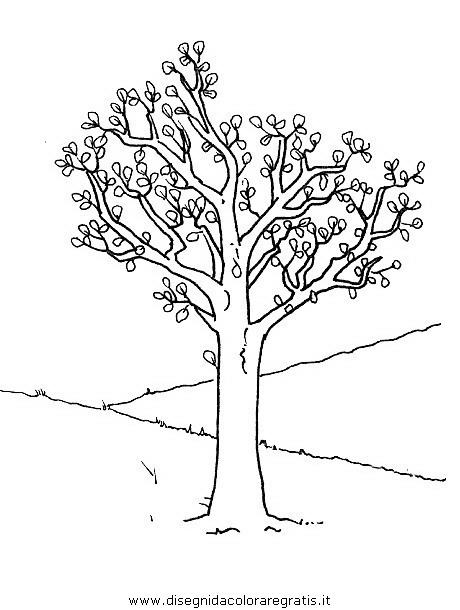 natura/alberi/piante_alberi_16.JPG