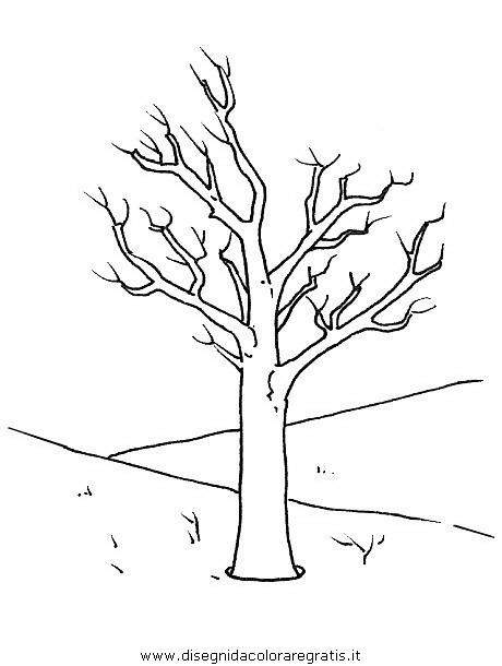 natura/alberi/piante_alberi_17.JPG