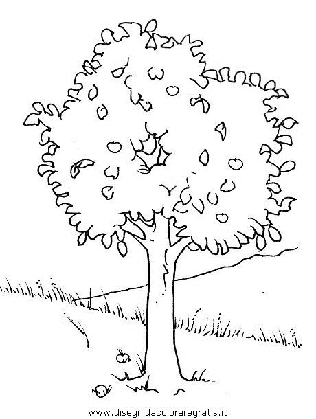 natura/alberi/piante_alberi_18.JPG