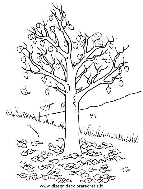 natura/alberi/piante_alberi_19.JPG