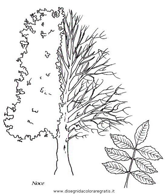natura/alberi/piante_alberi_24.JPG