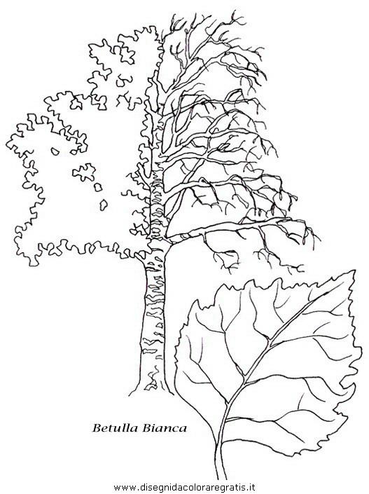 natura/alberi/piante_alberi_25.JPG