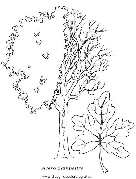 natura/alberi/piante_alberi_26.JPG