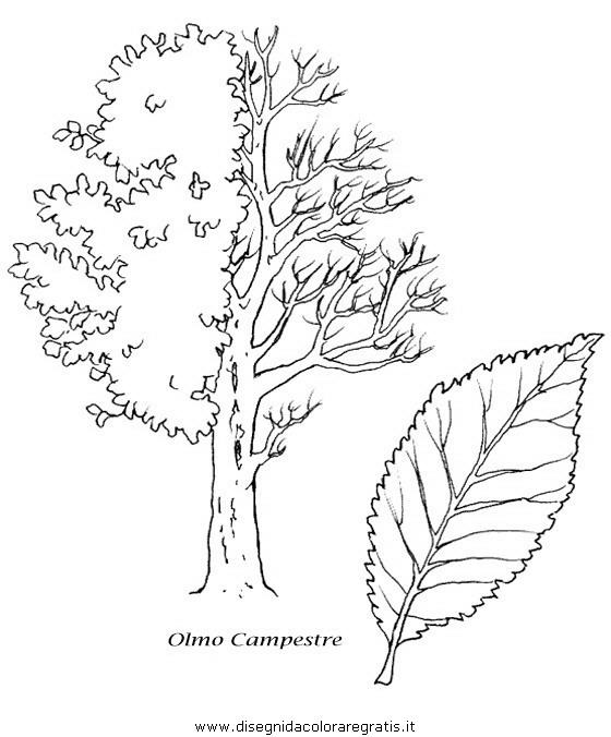 natura/alberi/piante_alberi_27.JPG