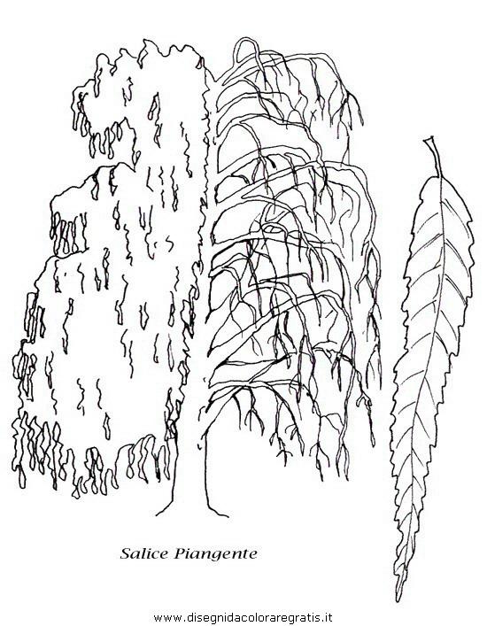 natura/alberi/piante_alberi_29.JPG