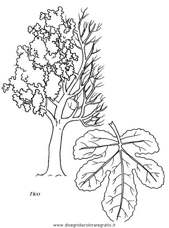 natura/alberi/piante_alberi_31.JPG