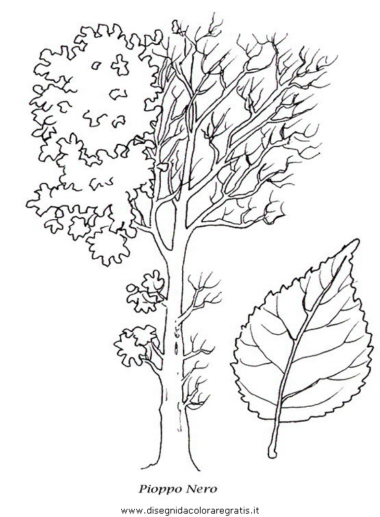 Disegno piante alberi 33 categoria natura da colorare for Foto di alberi da colorare