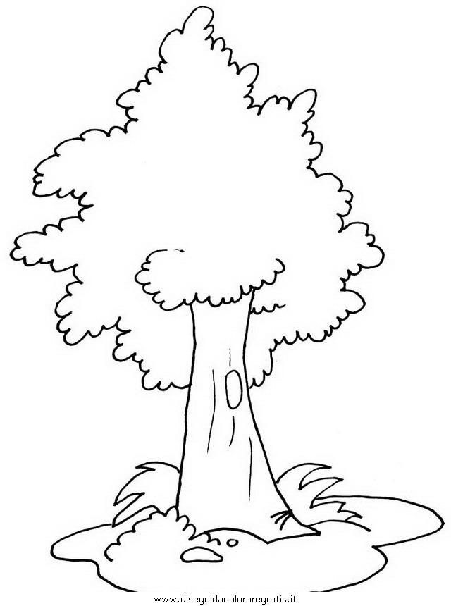 natura/alberi/piante_alberi_50.JPG