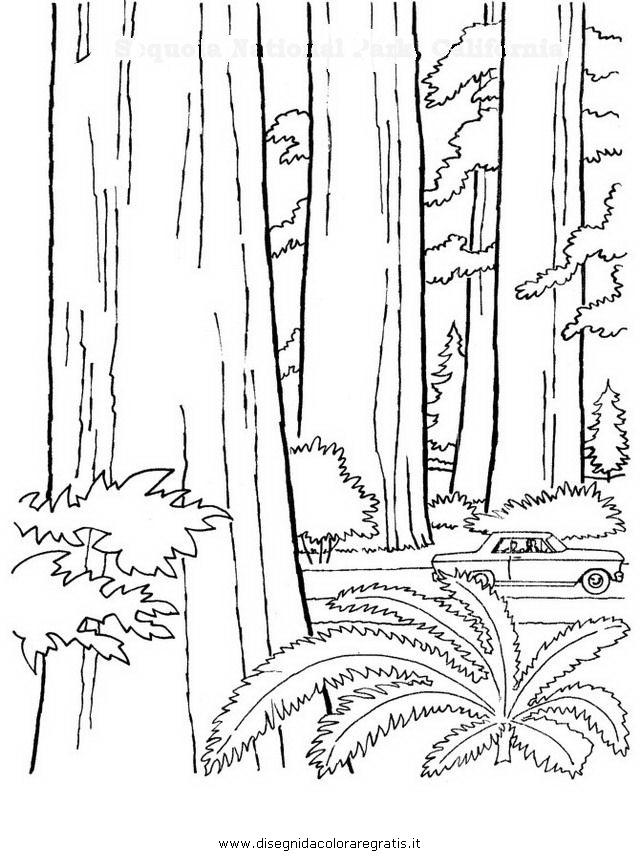 natura/alberi/sequoia.JPG