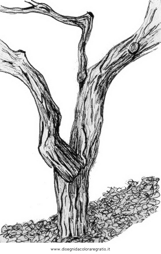 natura/alberi/tronco_1.JPG