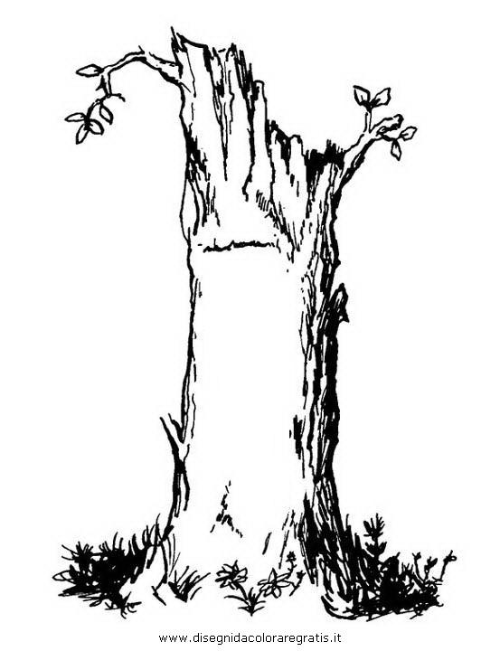natura/alberi/tronco_3.JPG