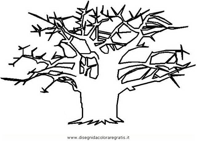 natura/alberi_speciali/baobab_2.JPG