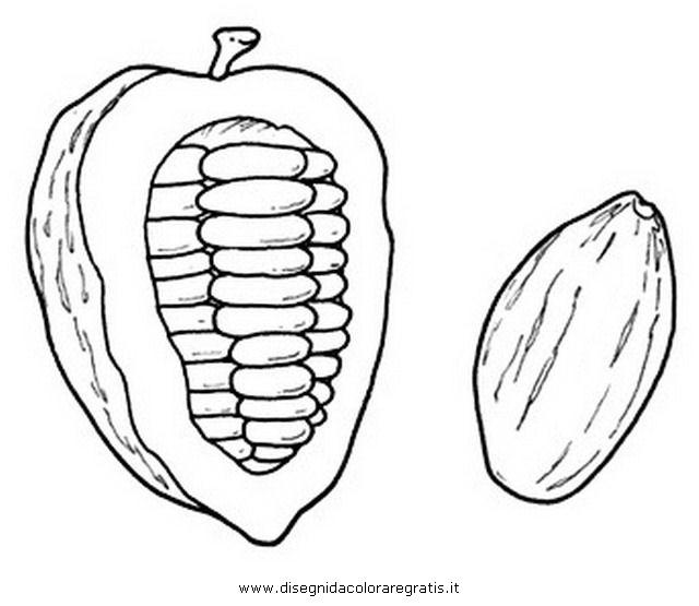 natura/alberi_speciali/cacao_0.JPG