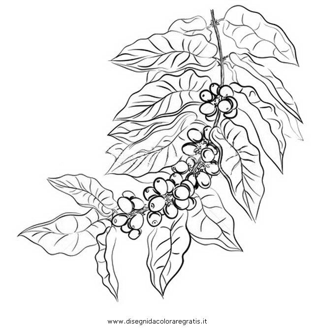natura/alberi_speciali/caffe_04.JPG